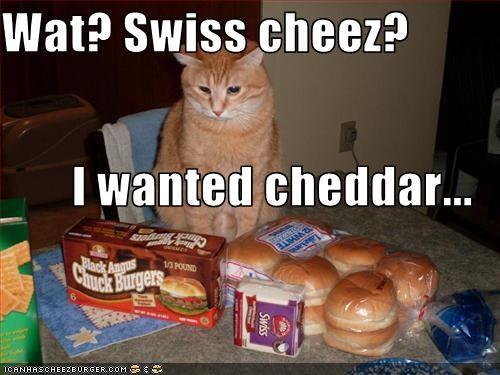 Cheezburger Image 2871143168