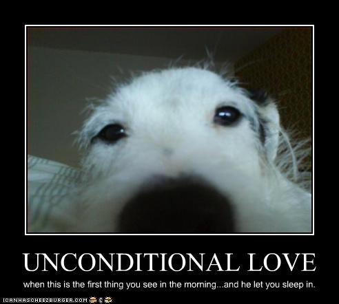 face love mans-best-friend sleep unconditional whatbreed
