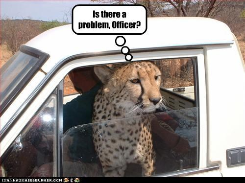 arrested car driving lolleopards police - 2872516352