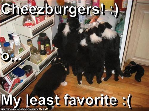 Cheezburger Image 2873046784