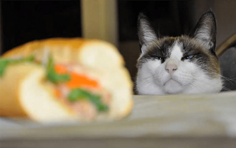 a funny picture of a cat eyeing a sandwich - cover for a list of animals looking at food that is very very funny