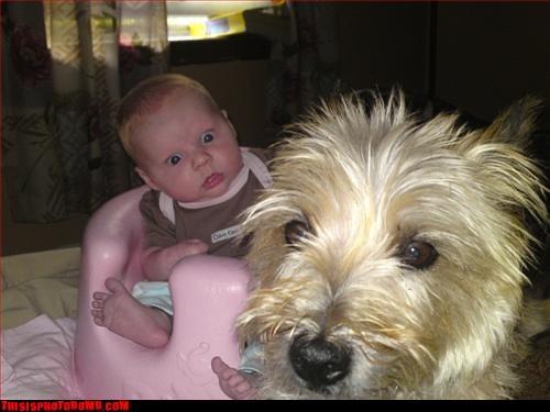 Animal Bomb baby dogs wtf - 2873649920