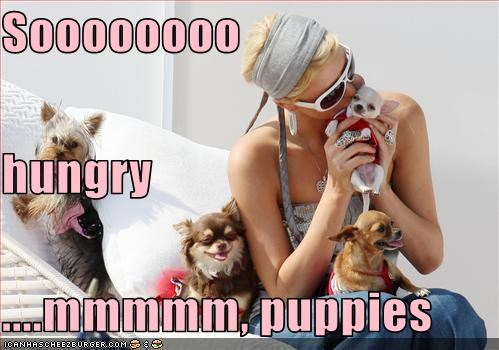 hungry paris hilton pets puppies - 2873878016