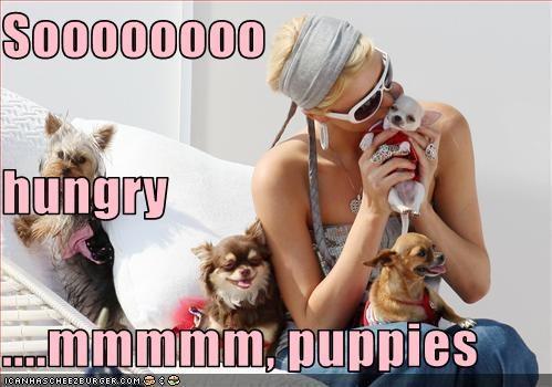 hungry paris hilton pets puppies - 2873878016