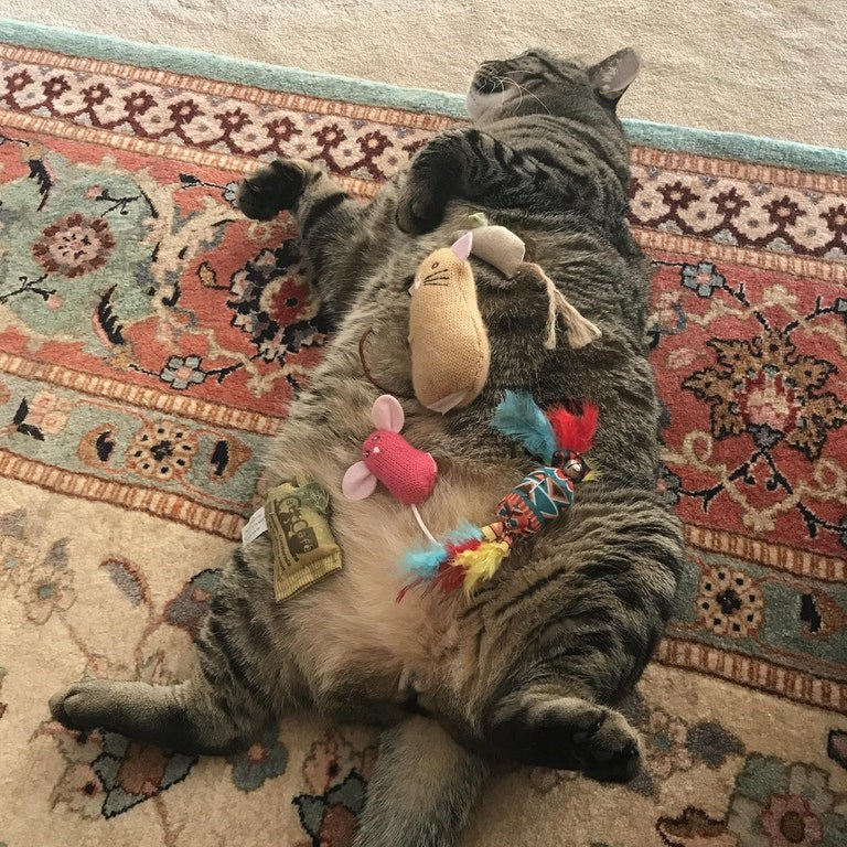 a funny cat laying on its back showing off its belly and having all his toys on top of him - cover for a list of funny cats showing off their bellies