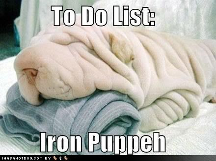 26 wrinkled dogs - cover image of dog that looks like he needs ironing