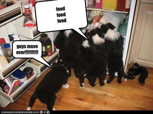 Cheezburger Image 2874955520