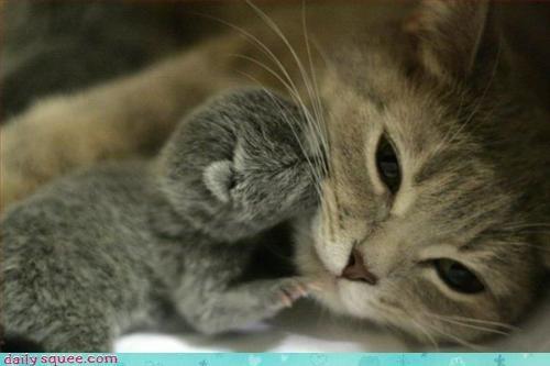 baby,kitten,mom