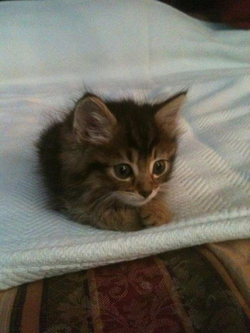 a very cute small kitten sitting on a blanket and keeping warm - cover photo for a kind of guide of what you should do if you come across stray kittens.
