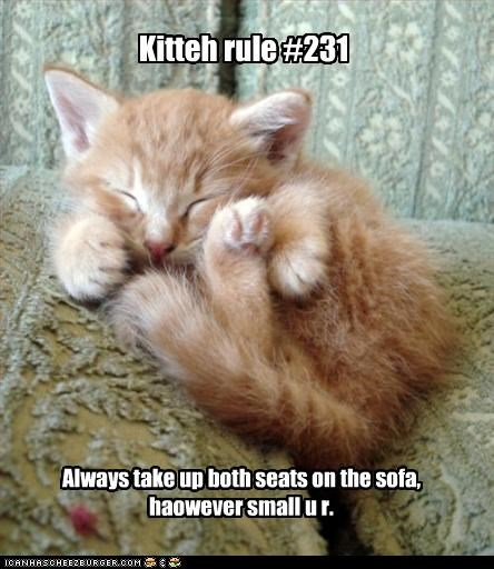 cute kitten rules sleeping sofa - 2875672576