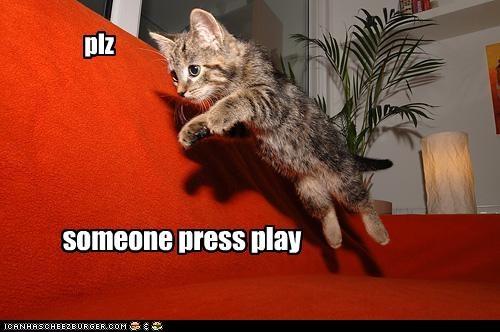 cute kitten play - 2876235264