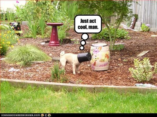 act cool head pug stuck - 2876618752