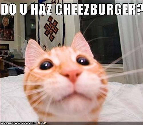 Cheezburger Image 2876788224