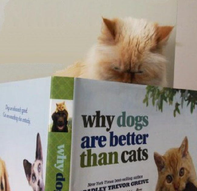 18 cats reading books about cats