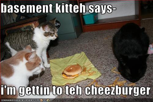 Cheezburger Image 2877438720