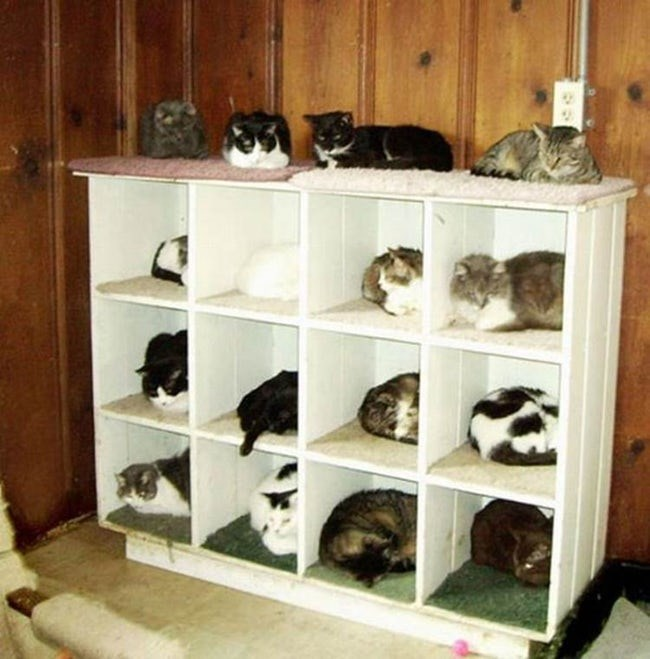 17 suggestions of how to arrange group of cats