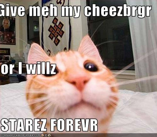 Cheezburger Image 2878581248