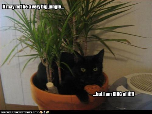 It may not be a very big jungle... ...but I am KING of it!!!