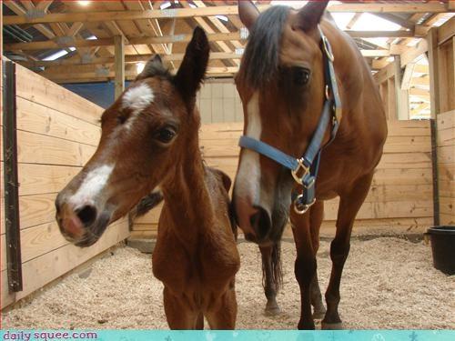 baby horse pony - 2881401856