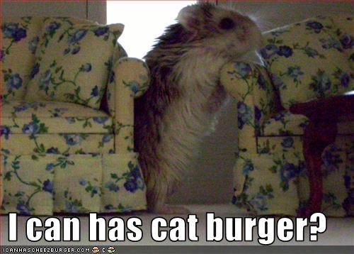 Cheezburger Image 2882015488