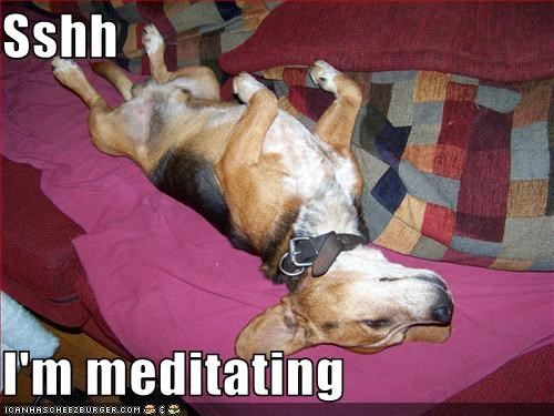 Sshh  I'm meditating