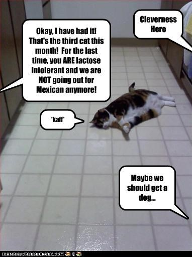 Okay, I have had it! That's the third cat this month! For the last time, you ARE lactose intolerant and we are NOT going out for Mexican anymore! *kaff* Cleverness Here Maybe we should get a dog...
