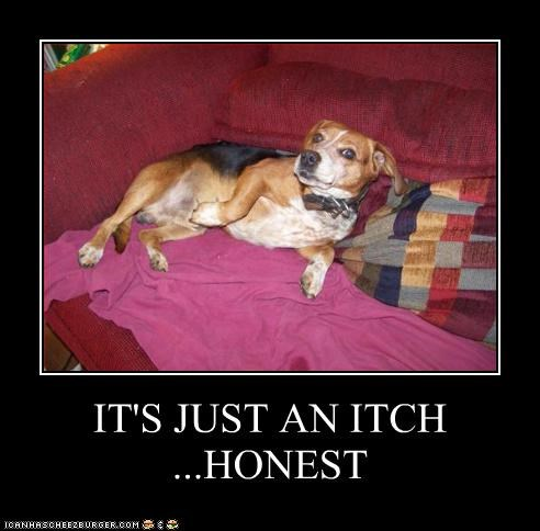 IT'S JUST AN ITCH ...HONEST