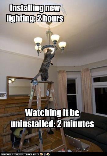bad cat helping lamp - 2886418688