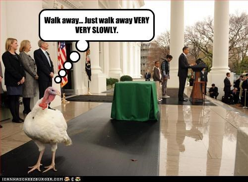 barack obama democrats pardons president Turkey - 2890171648