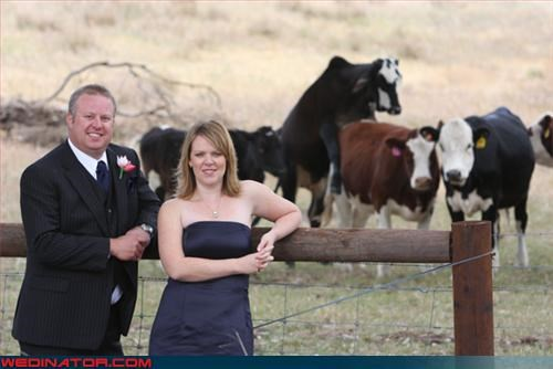 bride,groom,humping,miscellaneous-oops,moo,photobomb,surprise,were-in-love