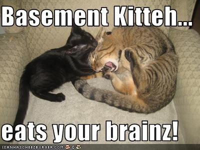 basement cat,brains,nom nom nom,zombie apocalypse
