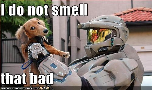 bad,costume,dachshund,halo 3,human,master chief,smell