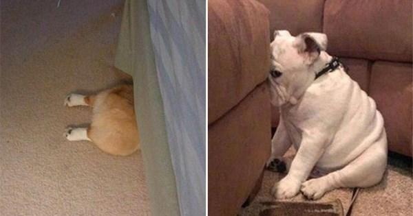 fotos perros escondiendose