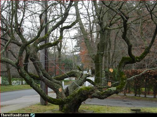 Mission Improbable,squirrel,training,tree,wires