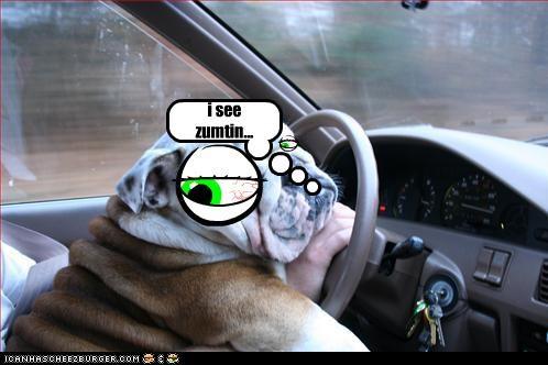 Cheezburger Image 2900202496