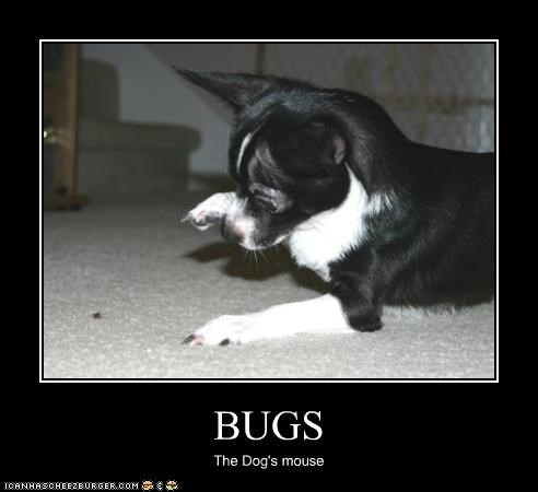 BUGS The Dog's mouse