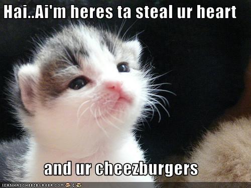 Cheezburger Image 2901036032