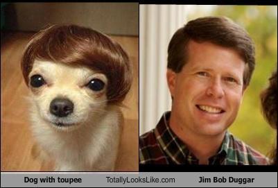 Dog With Toupee Totally Looks Like Jim Bob Duggar Cheezburger