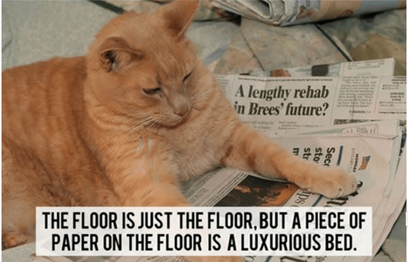 a funny thought told by a cat about how a floor is just a floor until you put paper on it.. then it's a luxurious bed - cover for a list of cat thoughts