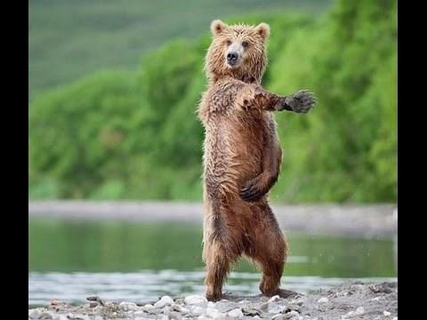 interesting animal dances in nature