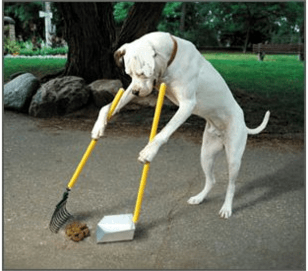 a photo of a large dog shoving up his own poop and cleaning - cover for a hashtag tread happening on unlikely tricks you can teach your pet