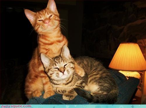 bros,cat,cute