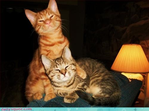 bros cat cute - 2902824960