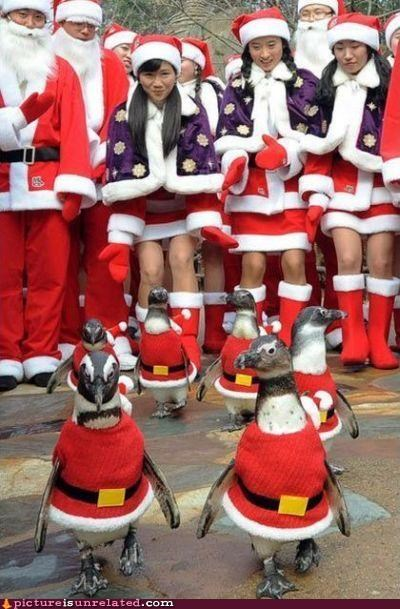 costume,penguins,santa,wtf