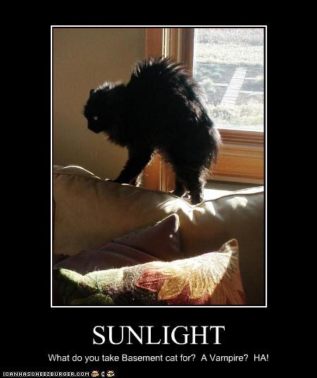SUNLIGHT What do you take Basement cat for? A Vampire? HA!