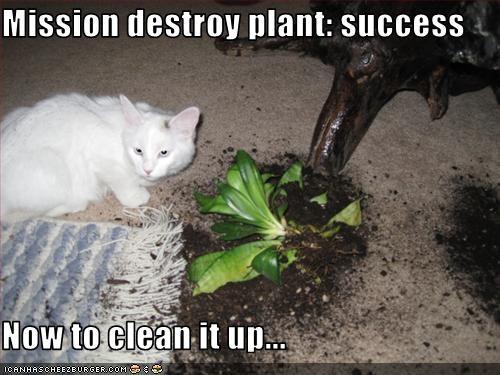 Mission Destroy Plant Success Now To Clean It Up Cheezburger
