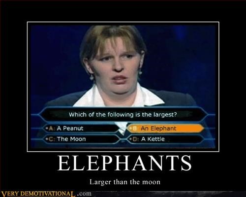 elephant for serious huge idiots moon