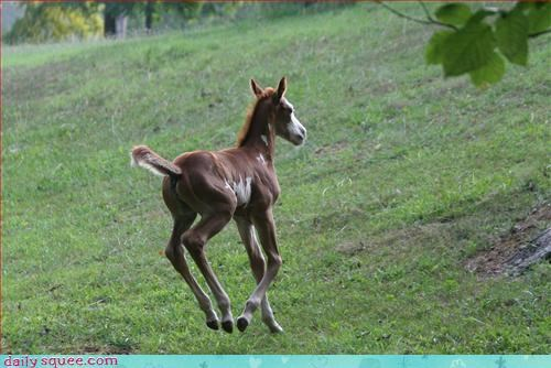 Fantasy Filly or a deer?