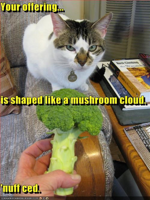 Cheezburger Image 2905767424