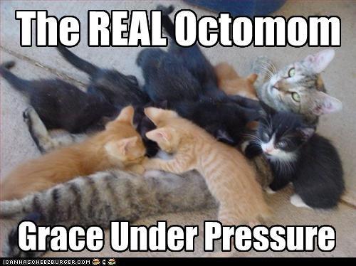 cute kitten momcat - 2905820416